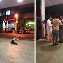 Cães esperam horas fora do hospital pelo retorno do seu tutor