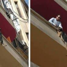 Cão acorrentado tenta saltar da varanda em uma tentativa de se libertar