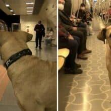 Cão de rua pega trem sozinho todos os dias e trás felicidade as pessoas