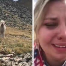 Cão desaparecido a 19 dias se reúne novamente com sua mãe humana