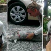 Cão desmaia de alegria quando tutora volta para casa após 2 anos