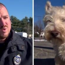 Cãozinho corre até a polícia e começa latir alto para seguirem ele