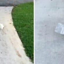 Cãozinho tenta carregar um jornal que é o dobro do seu tamanho