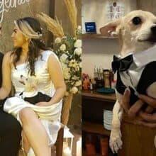 Casal adota um cãozinho maltratado e o torna padrinho de casamento