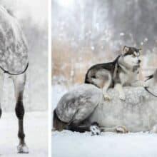 Cavalo e um cachorro formam uma linda dupla e são grandes amigos