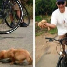 Ciclista adota cachorrinho que encontrou enquanto passeava de bicicleta