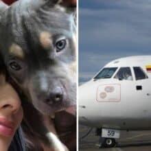 Companhia aérea deverá pagar multa pela morte de um cão