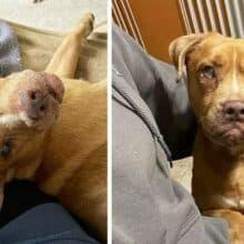 Depois de 8 anos acorrentado, cão cego ganha a sua primeira cama