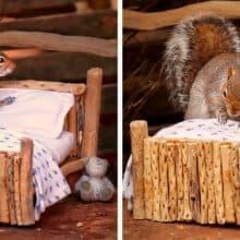 Esquilo arruma a cama para ir dormir construída para ele por uma mulher