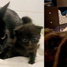 Gatinha vê gatinho órfão e o pega pela pata e o cria junto com seu filhote