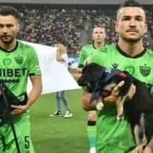 Jogadores de futebol entram em campo com cães para adoção