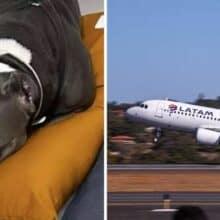Latam suspende transporte de pets após morte de outro cachorro