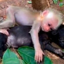 Macaquinho encontra um cão e o abraça firmemente deixando ele seguro