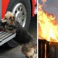 Mãe canina passou pelo fogo várias vezes para resgatar seus filhotes